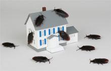 Где живут тараканы?