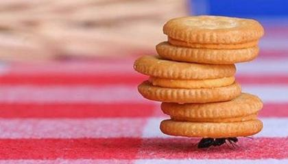 Муравей может поднять вес, который в 50 раз превышает его массу!