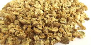 Пиретрум от муравьев - безопасное, но не быстрое средство