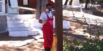 Профессиональные дезинсекторы помогут надолго вывести муравьев из дома