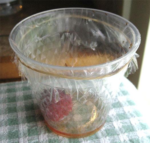 Самодельная ловушка поможет безопасно избавиться от мошек в квартире