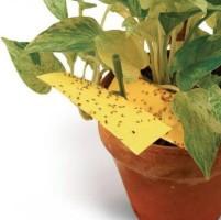 Способ борьбы с мошками в цветочных горшках