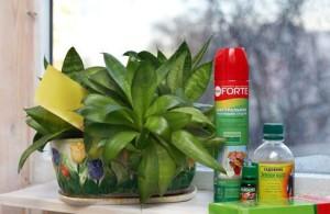 Средства борьбы с мошками в цветочных горшках