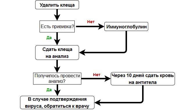 Схема: что делать при укусе клеща