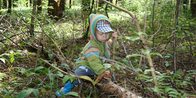 В лесу риск укуса клеща наиболее высок