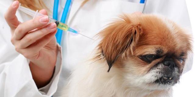 Ввод вакцины от клеща собаке