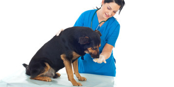 Прием таблетки псом