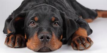 Ухудшение самочувствия собаки