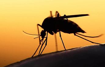 efirnyie-masla-ot-komarov-i-moshek2
