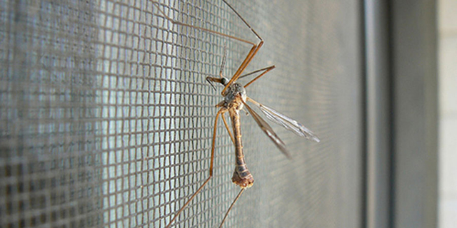 kak-izbavitsya-ot-komarov-v-kvartire2