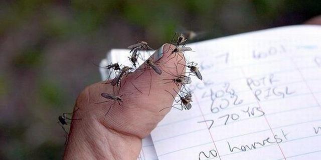 kak-nayti-i-ubit-komara1