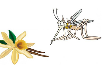narodnyie-sredstva-ot-komarov-i-moshek-s-vanilinom3