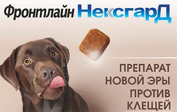 tabletki-frontlayn-neksgard-neksgard