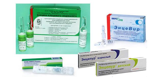 Варианты вакцин против клещевого энцефалита