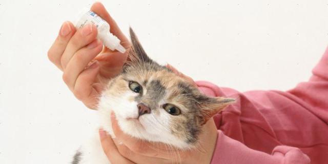 Лечение ушного клеща