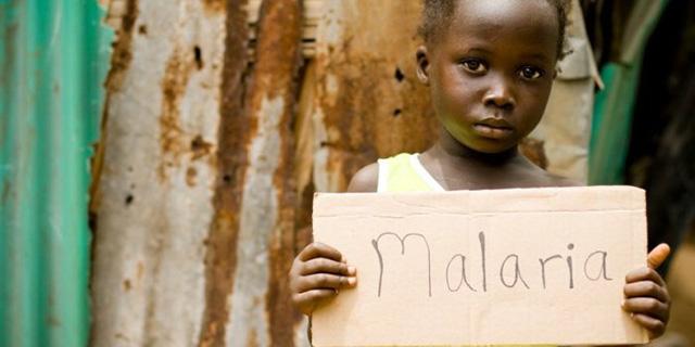 vsyo-o-malyariynom-komare-chem-opasen-i-kak-ego-otlichit4